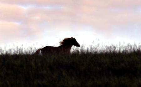 Wild Horse on Epynt Hills,Wales, UK
