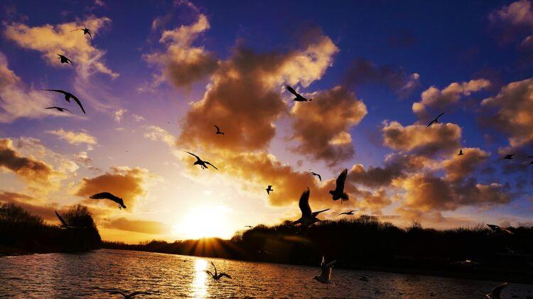 Rowing lake sunset
