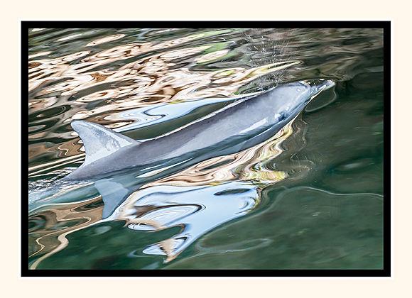 Dolphin Enchantment