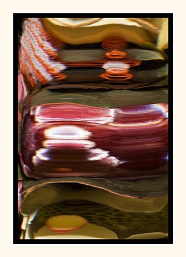Proteas Through Glass