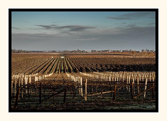Winter Wine Land South Eastern Australia