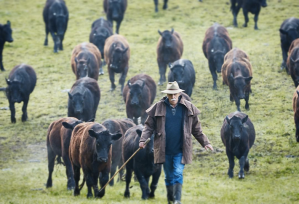 Our beef supplier O'Connors, Gippsland