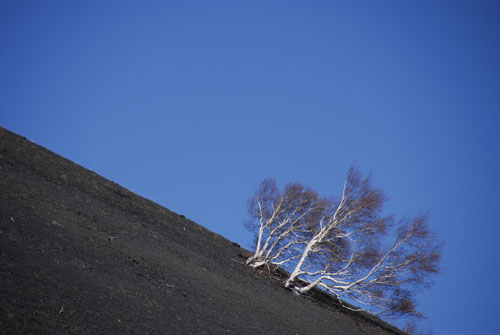 """Tree on the Etna"""