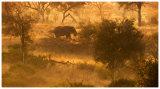 Elephant at dawn