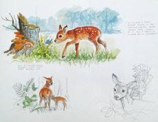 Young Bambi