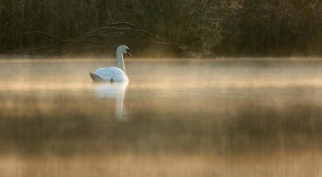 Dawn on Swan Pool by Alan Rich 11 A