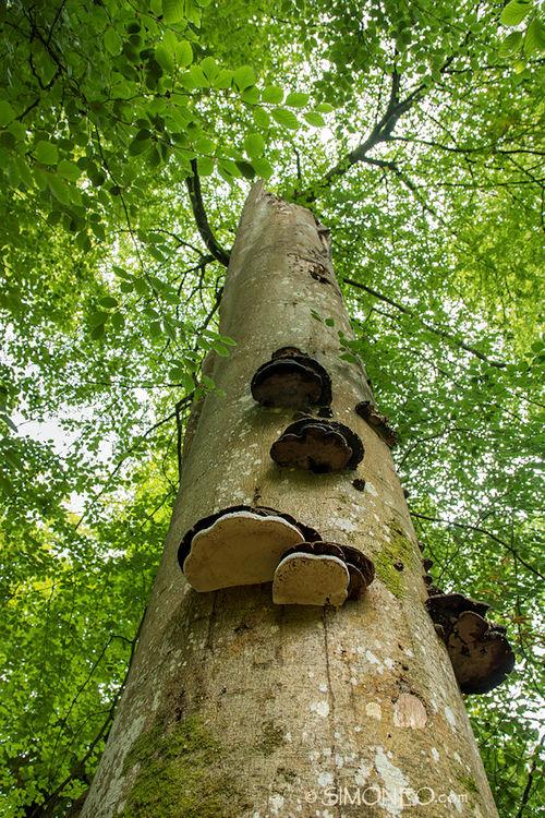 Eeuwenoude bomen in het New Forest, Engeland