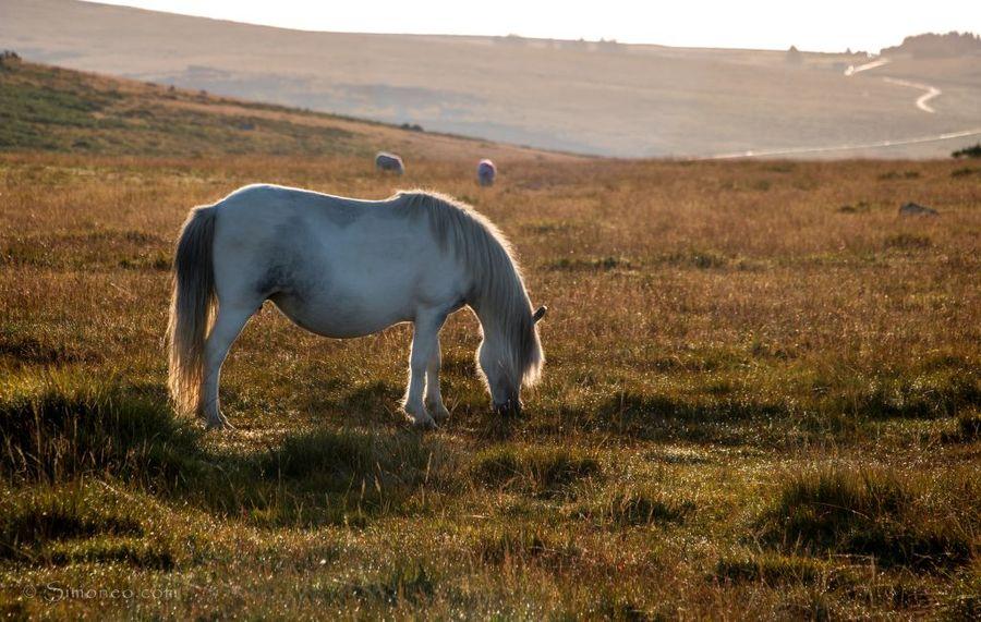 Free roaming horses