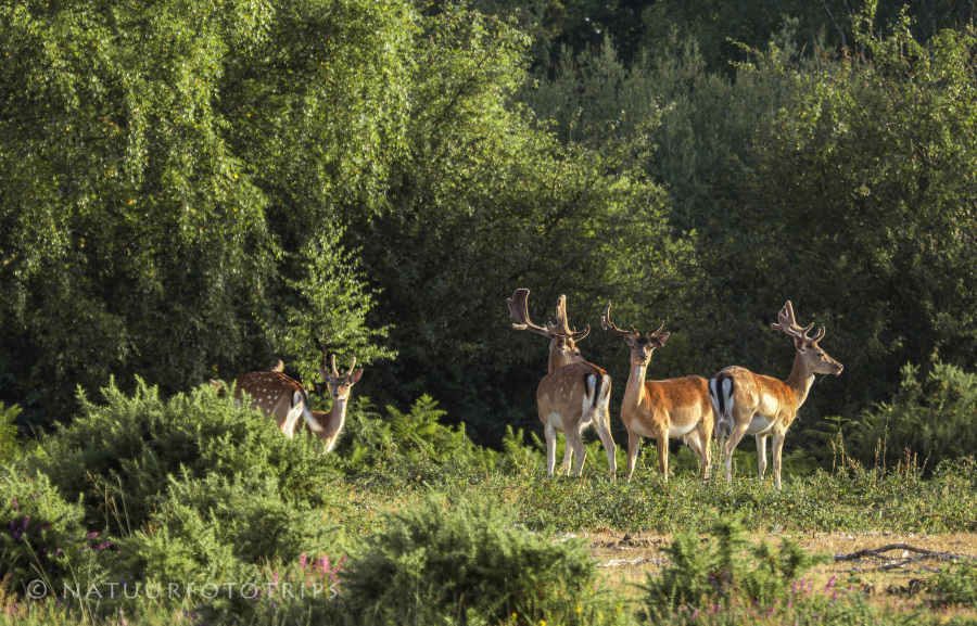 New Forest national park wildlife tijdens fotoreis natuurfototrips