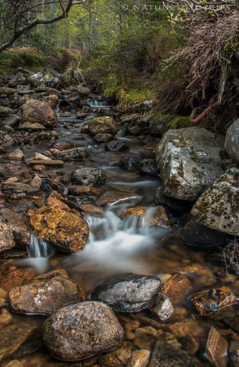 Cocham a' Ghuib stream in Glenmore Forest Park