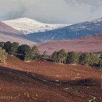 """Fotografiereis """"het groene hart van de Highlands"""""""
