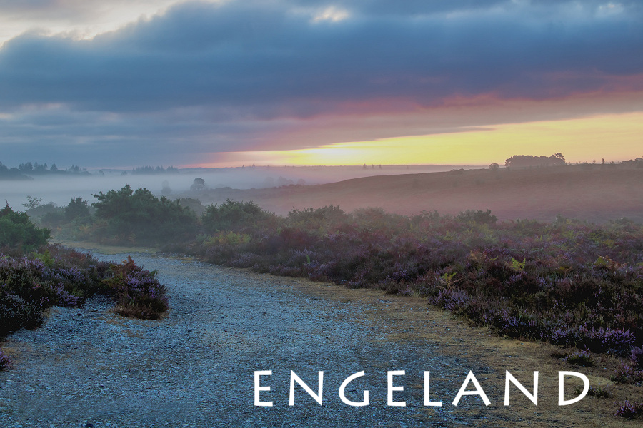fotoreizen naar engeland - new forest national park