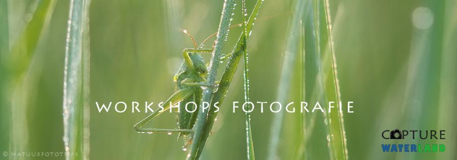 workshops natuurfotografie waterland
