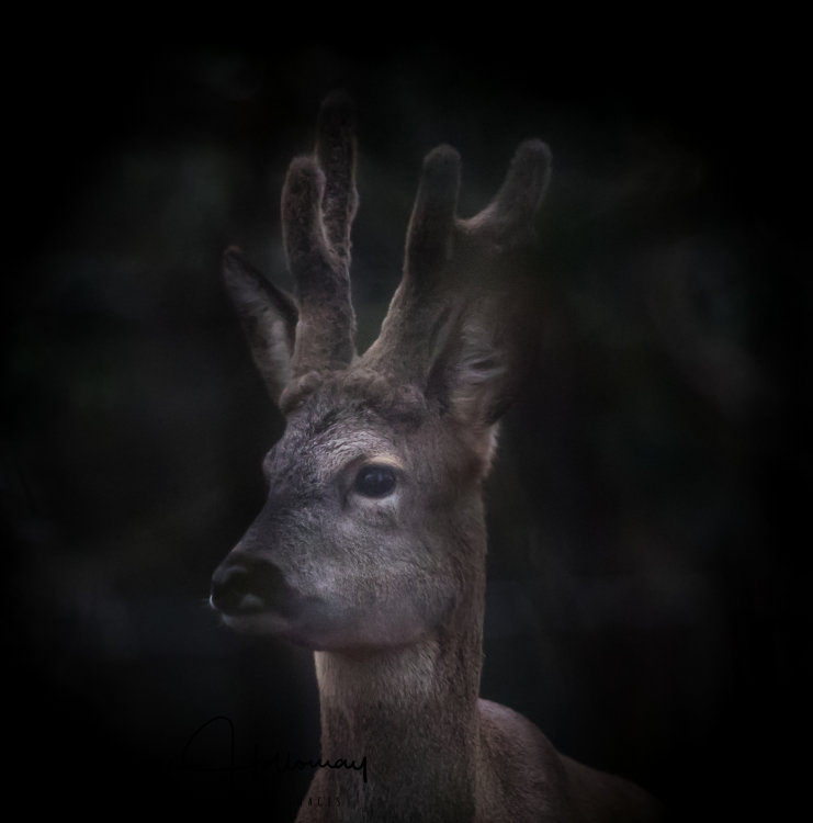 Mystical Roe deer