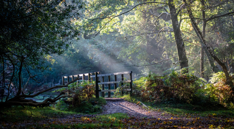 A little bit of magic and mystery - enchanting bridge