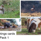 Greetings cards Pack 1