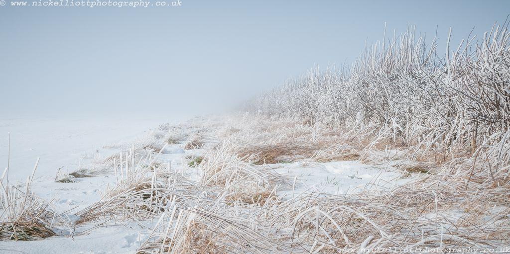 Winter Hedge