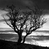 Misty Moody Dartmoor