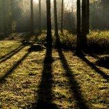 Woodland Beams