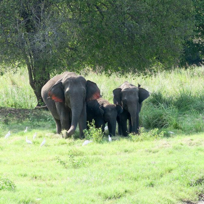 THE ELEPHANT FAMILY
