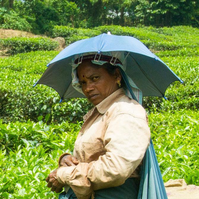 Plantation Lady Worker