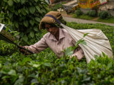 Tea & Spice Plantations