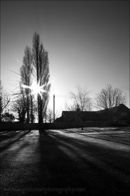 Elwes Arms Trees & Shadows