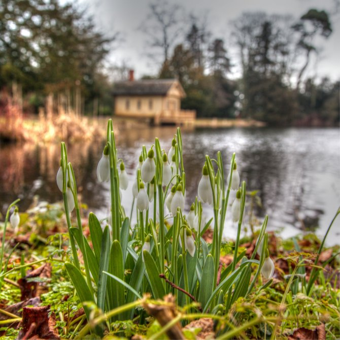 Boat House Snowdrops