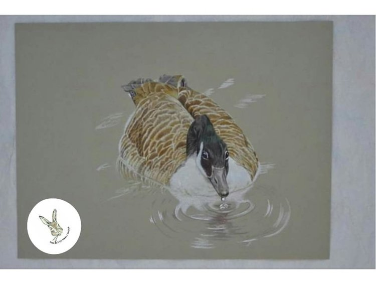 canadian goose £28 postage £2 pastel paper 9x12 high quality pencil unframed