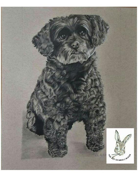 dog portrait commission graphite pencil