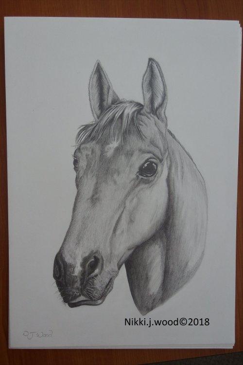 horse portrait commission