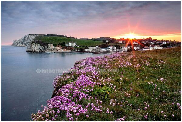 Freshwater Bay  Pinks.