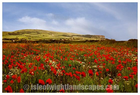 Poppy field Chale