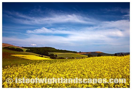 Rape field Shorwell