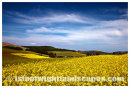 Rape field Shorwell