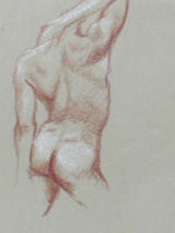 Male Study 1