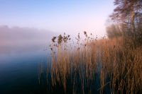 Reeds at Ormesby Little Broad