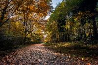Bacton Woods