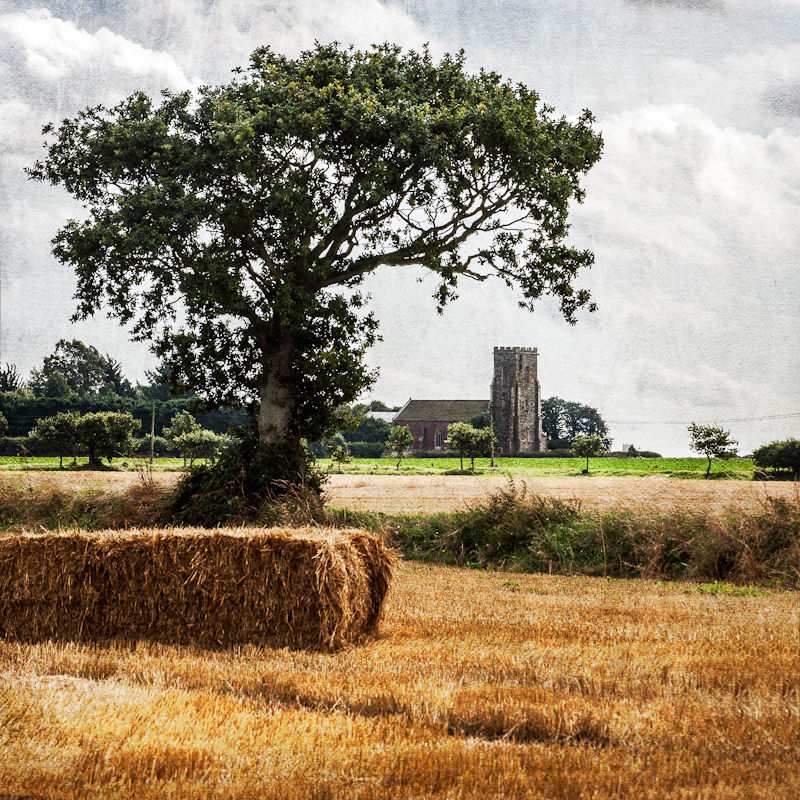 Old oak and Church