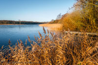 Rollesby Broad in Norfolk