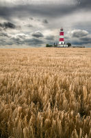 Happisburgh Lighthouse in field of Barley