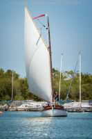 White Sailed Norfolk Wherry