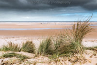 Marram grass at Holkham