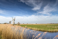 Reeds on Thurne Staithe leading to the Thurne Mill