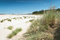 Marram grass on Wells Beach