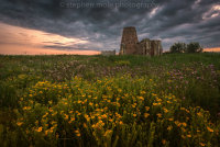 Wild Flowers and St Benet's Abbey