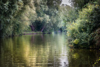 River Ant reflections