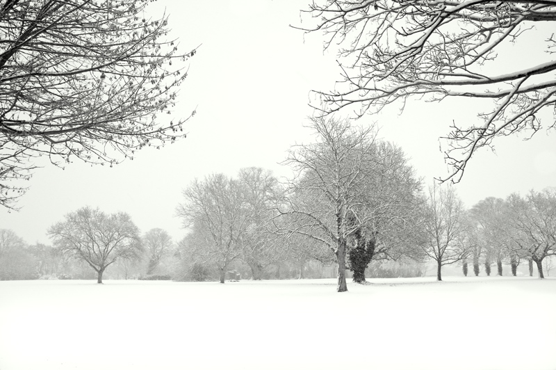 Ormesby Tress White out