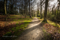 The Woodland Walk