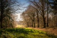 Through the woods at Felbrigg